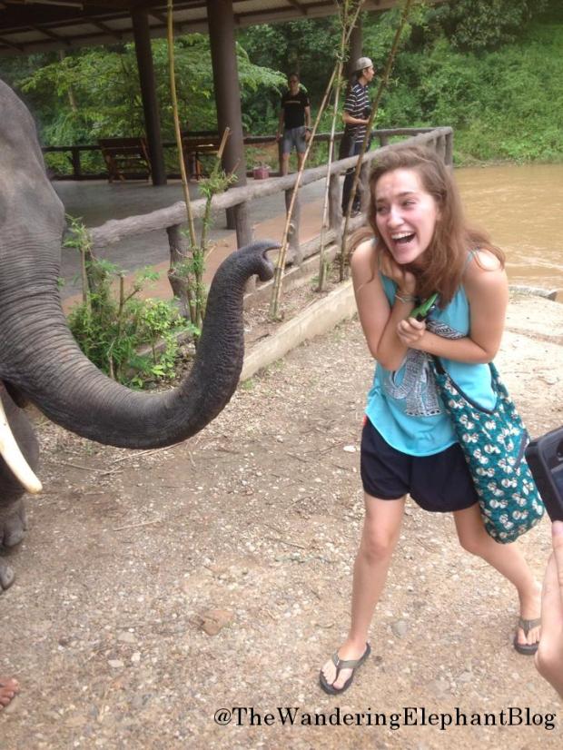 elephante1
